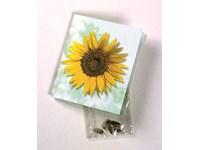 Klappkärtchen Sonne, Zwergsonnenblumen-Samen, 1-4