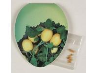 Klappkärtchen Ei-Form, Eierbaumsamen, 1-4 c Digita