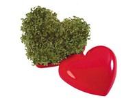 Ein gesundes Herz, Kresse