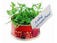 Mini Garten Chili 73 Øx38 mm mit Magnet, Chili, 1-