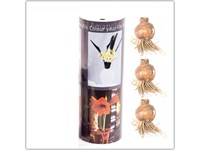 Speziale Weihnachtshülse XL mit Amaryllissen