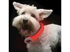 Visto PetSaber Dog Collar Petit - green